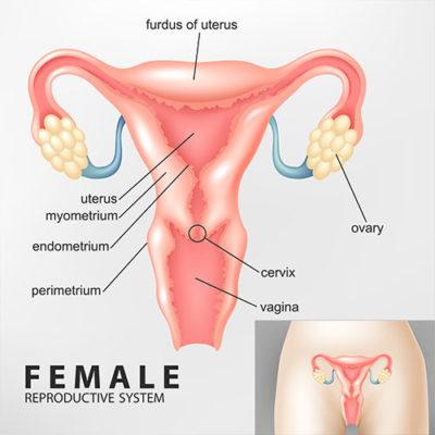 vaginal-agenesis-symptoms-treatment-options-chennai